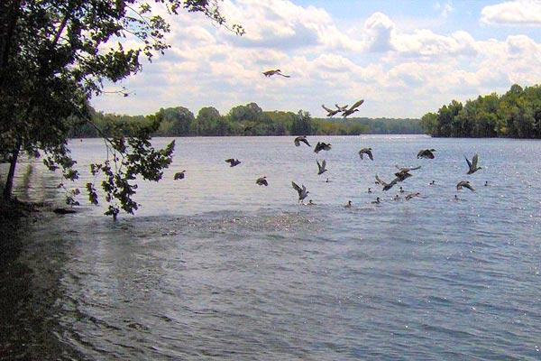Hickory Lake, Bledsoe Creek State Park, Reliant Realty, Nashville, TN